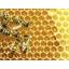 Gelée royale pollen