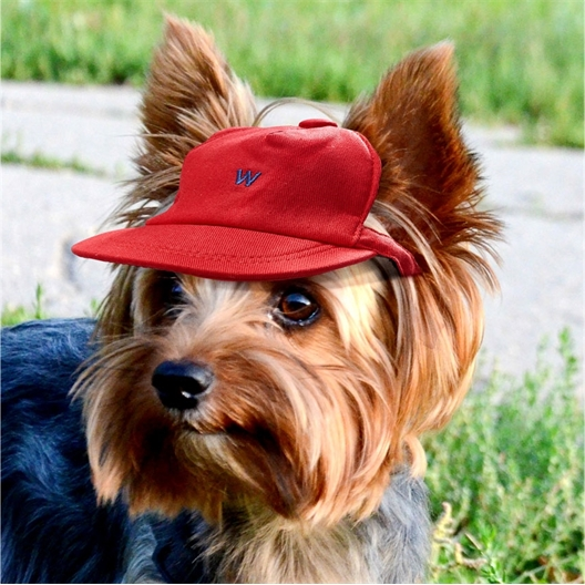 Casquette chien rouge : 3 tailles